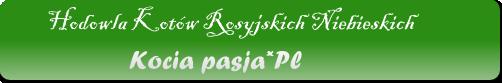 hodowla kotów rosyjskich niebieskich 'kocia pasja *PL'