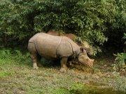 Zdjęcie nosorożców