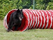 Pies pokonujący tunel