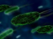 Zdjęcie mikroskopowe bakterii