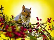 Zdjęcie wiewiórki