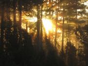 Jesiennie w lesie