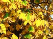 Żółte, jesienne liście