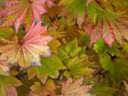 Piękne kolory jesiennych liści