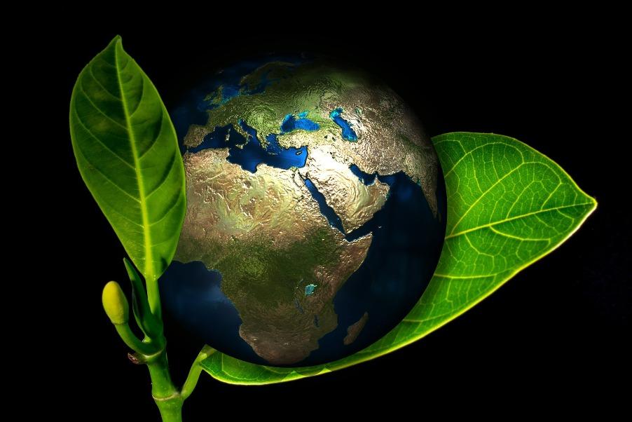 Ziemia na młodym liściu