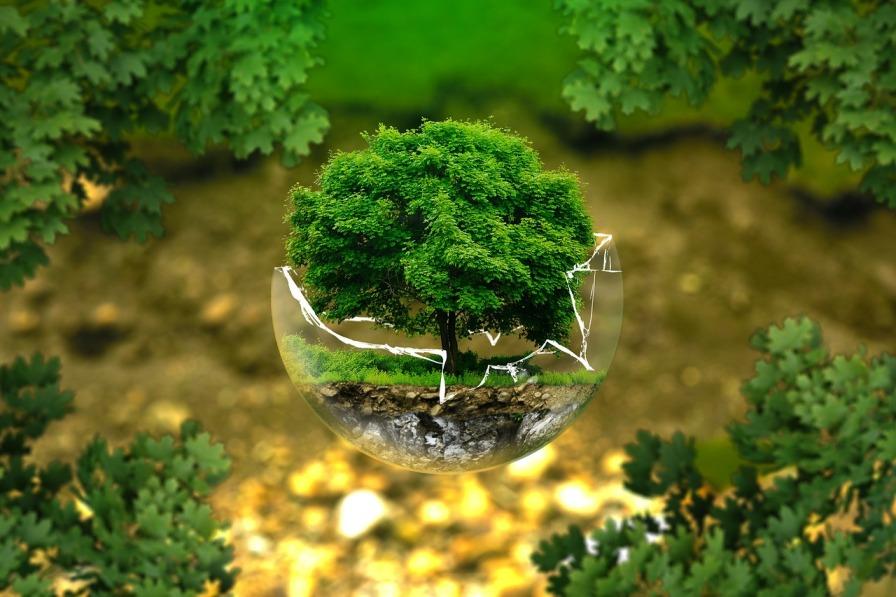 Zielone marzenie