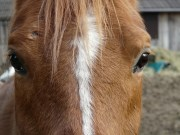 Mina konia