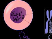 Obrazek komórki