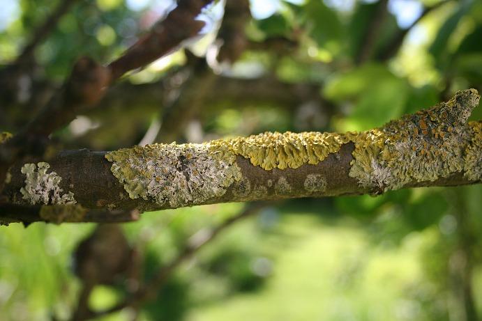 Porosty - grzyby zlichenizowane