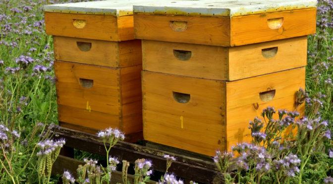 Ekolog: nie da się chronić pszczół, kiedy ignoruje się potrzeby ich larw