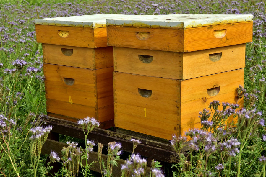 Ule pszczele