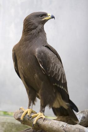 Zdjęcie ptaka
